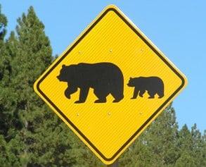 Je hooggevoelig kind & beren op de weg